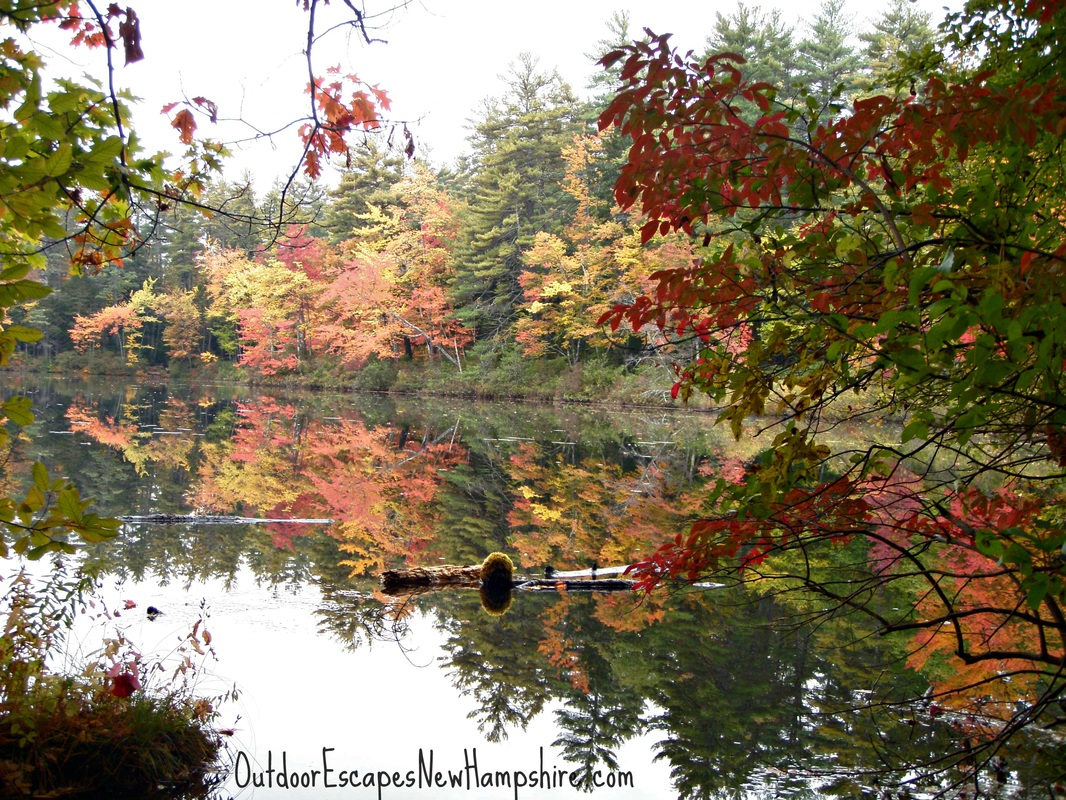 Fall foliage tours in New Hampshire